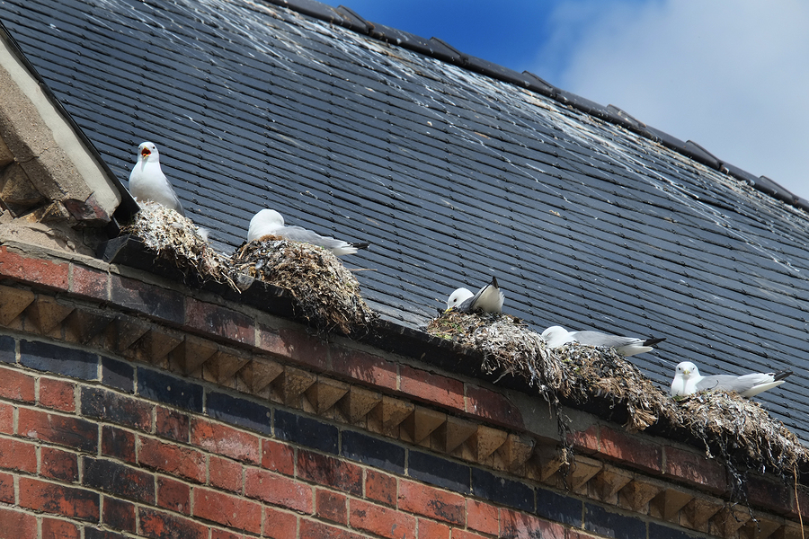 Caring For Gutters During The Summer Holloway Gutter Corp